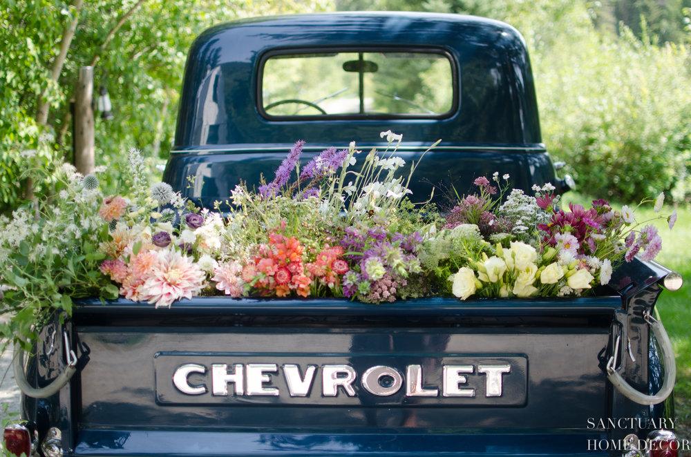 Flower Farm Visit-1952 Chevy Pickup