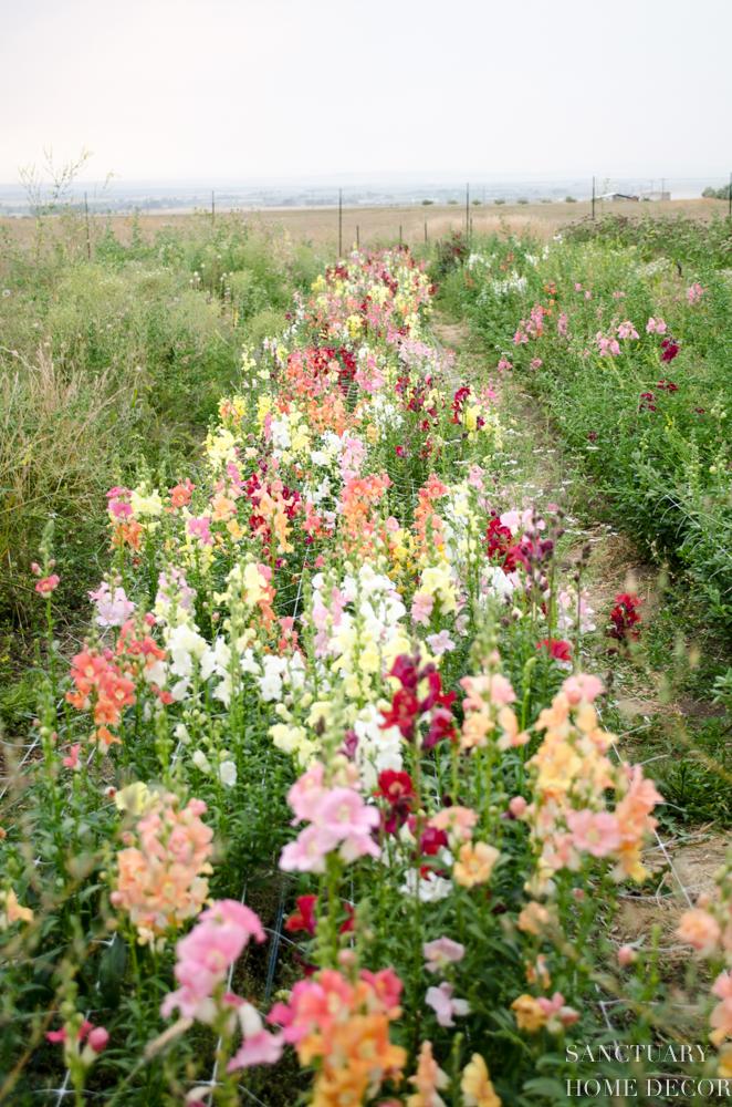 Montana Flower Farm-10.jpg