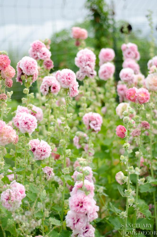 Montana Flower Farm-3.jpg