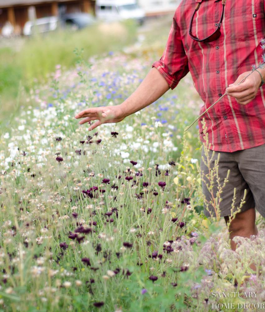 Montana Flower Farm-5.jpg