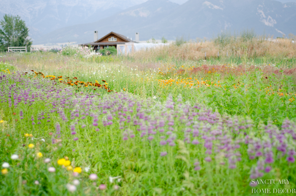Montana Flower Farm-7.jpg
