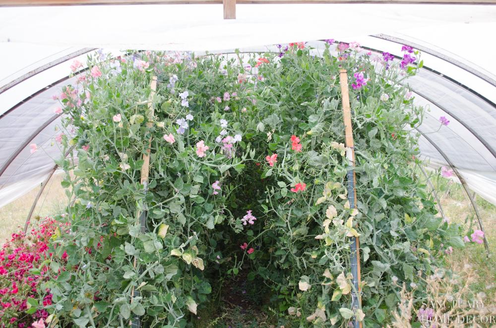Montana Flower Farm-9.jpg