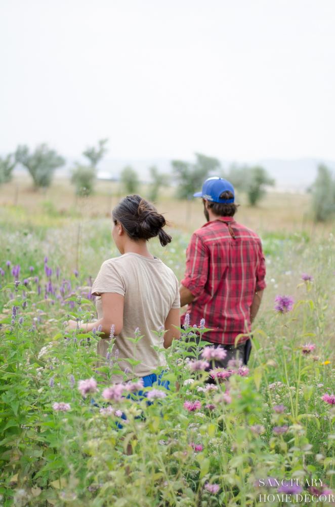 Montana Flower Farm-Kokoro