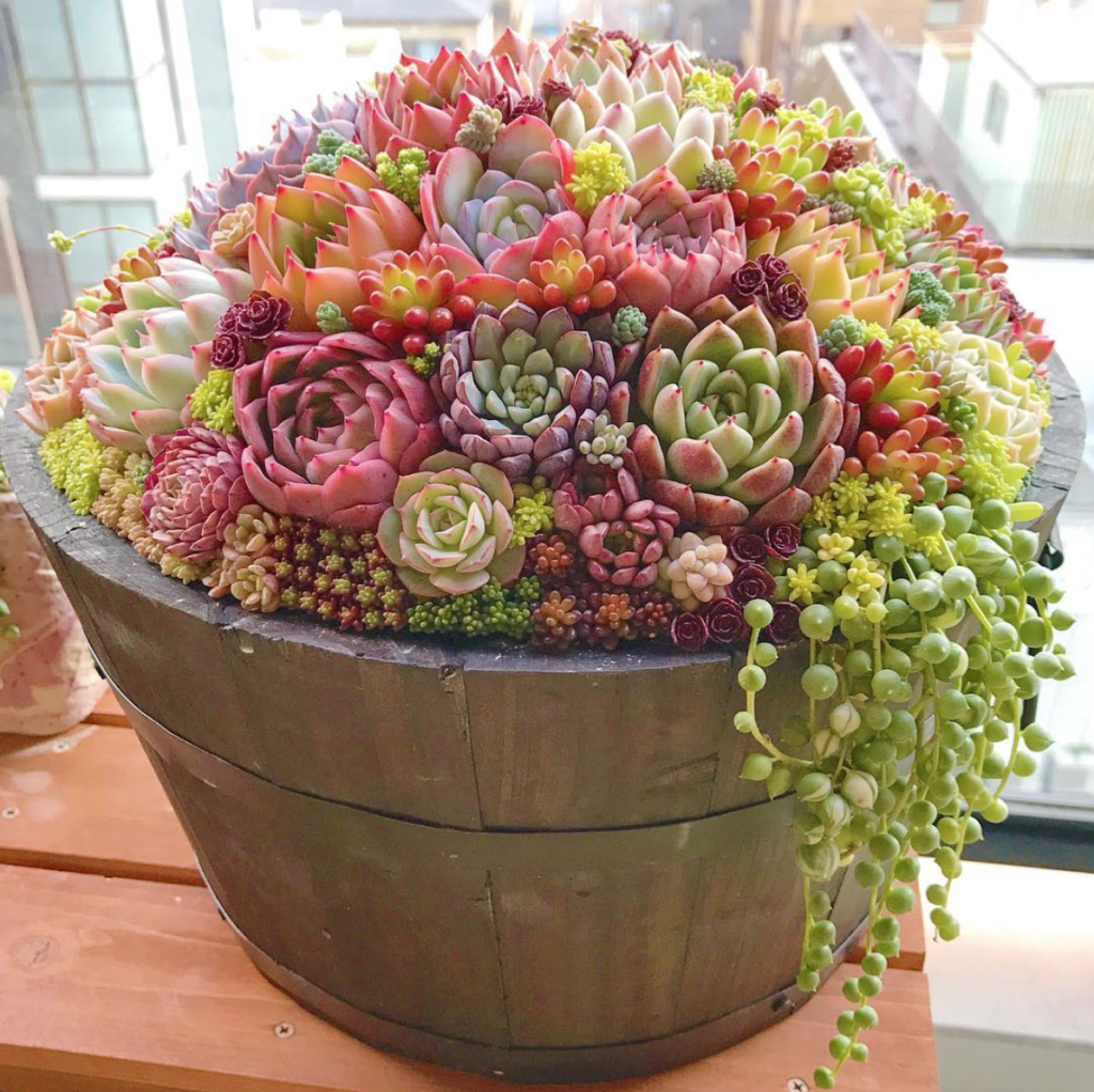 Mother S Day Container Garden Ideas: 15 Unique And Beautiful Container Garden Ideas